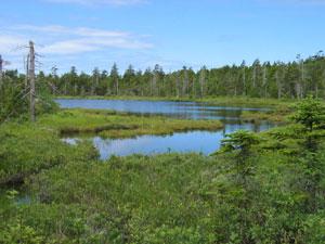 Caribou Plain Trail - Fundy National Park