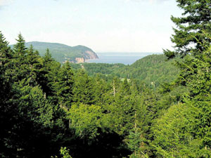 Fundy National Park - New Brunswick