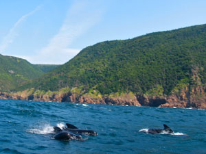 Cape Breton Highlands - whales